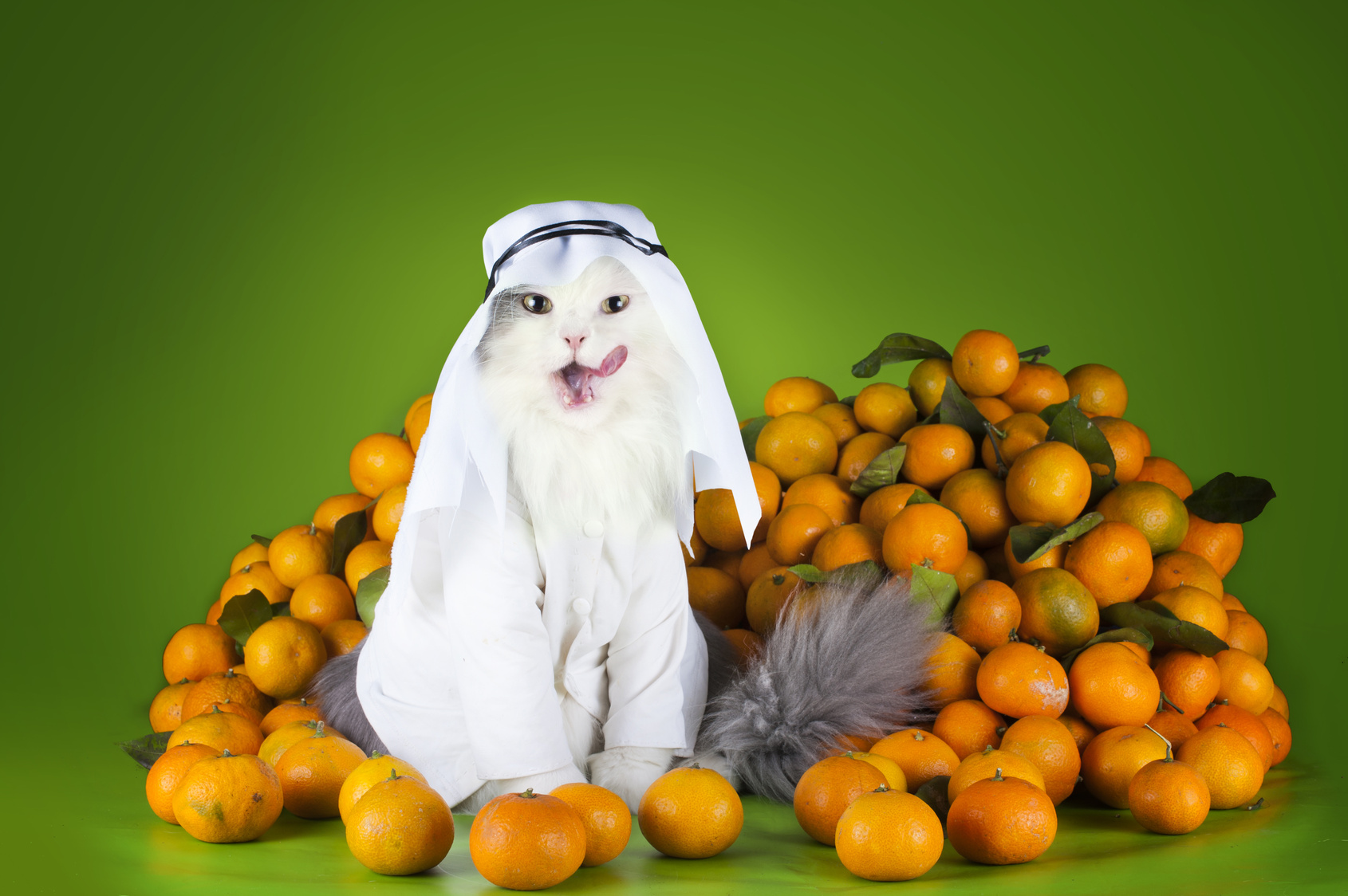 today s oddest picture a cat dressed as an arab selling