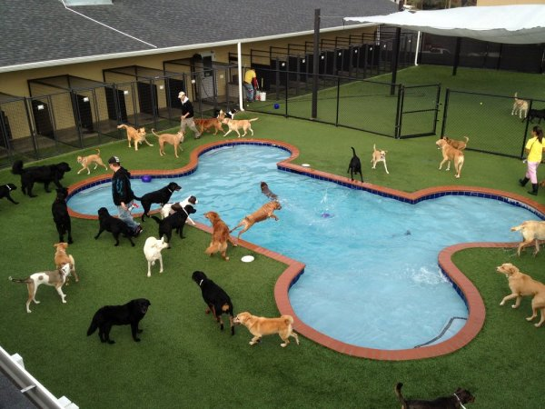In America It Is A Dog S Life Pet Paradise Opens Luxury