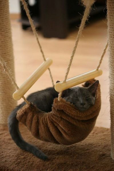Newest Trend  Animals In Hammocks